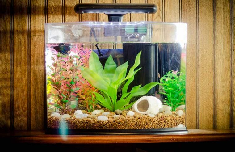 Reviewing Different Types of Fish Tank Filters!