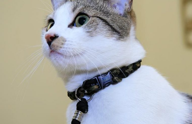 Tips when Buying Cat Collars, Feeding Bowls, and Toys