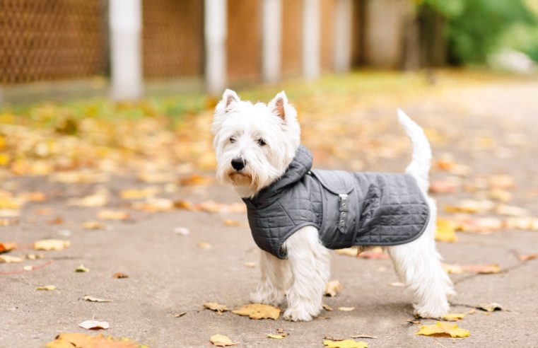 All About Buying Winter Coats For Dogs!